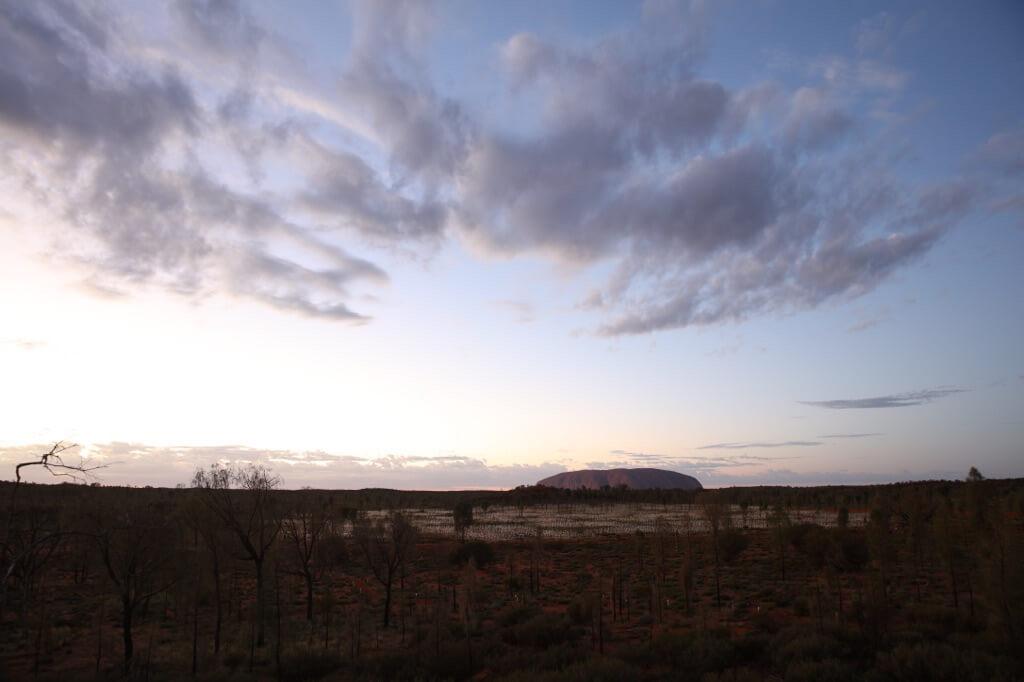 Field Of Light Uluru - Desert setting 0X0A0472_xl