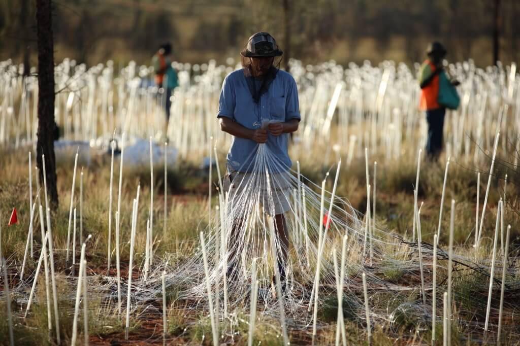 Field Of Light Uluru - Optical fibre 0X0A9765_xl
