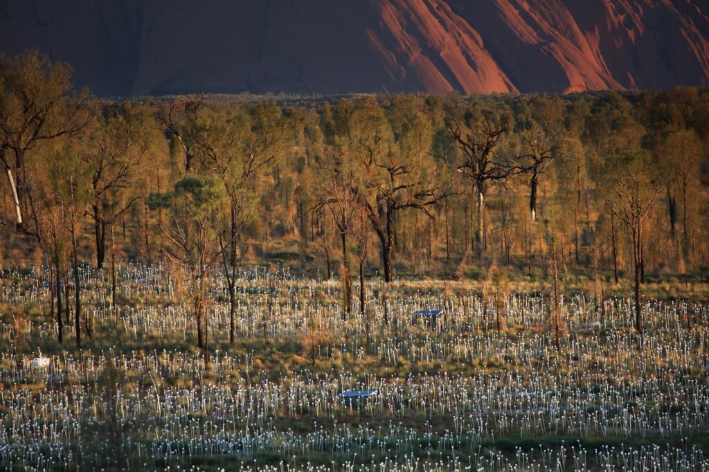 Field of Light Uluru - Amongst Nature 0X0A9283_xl