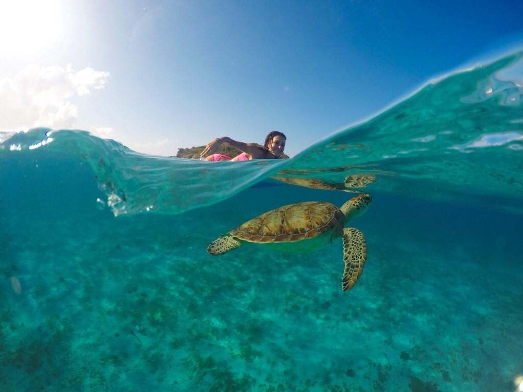 02. Birthday Girl and her Turtle - Jeremie Tronet Kopie_rt