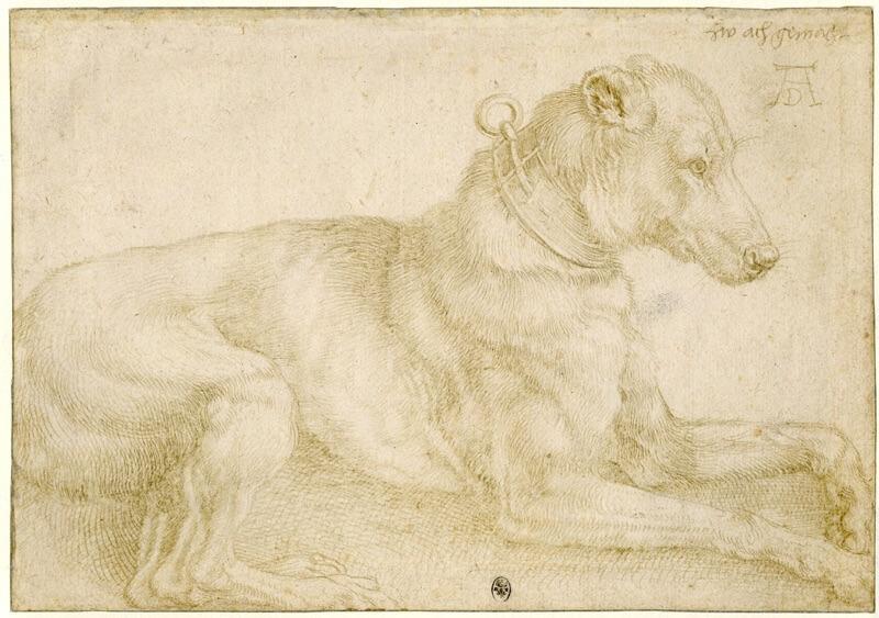 Silverpoint - Albrecht Durer - Cane che riposa - 1520