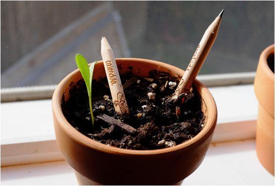 matita sprout 8