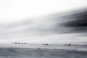 Fjällräven Polar10