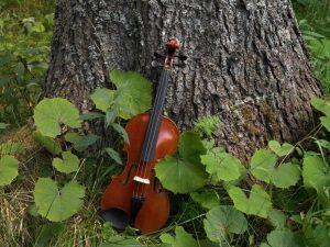 Visitfiemme Alberto Campanile_ Paneveggio, la foresta dei violini